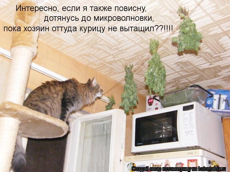 Котоматрица: Интересно, если я также повисну, дотянусь до микроволновки, пока хозяин оттуда курицу не вытащил??!!!!
