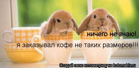 Котоматрица: прости,я заказывал кофе. я заказывал кофе не таких размеров!!! ничего не знаю! ничего не знаю!