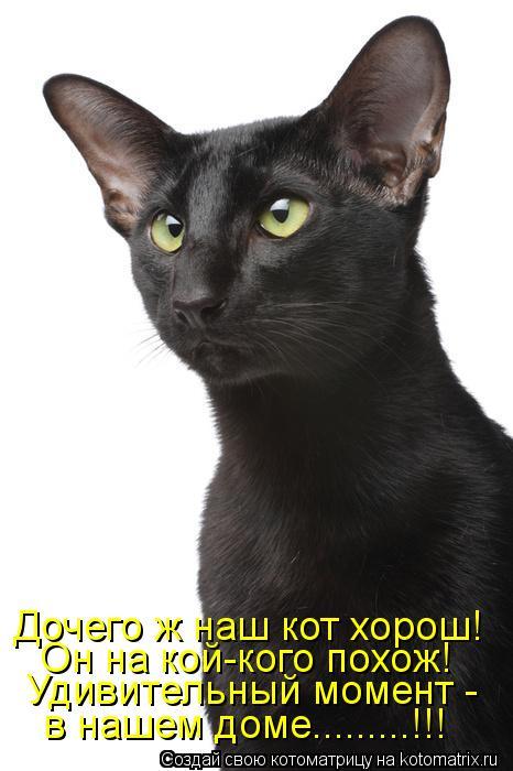 Котоматрица: в нашем доме.........!!! Удивительный момент - Он на кой-кого похож! Дочего ж наш кот хорош!
