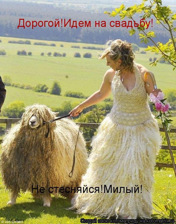 Котоматрица: Дорогой!Идем на свадьбу!  Не стесняйся!Милый!