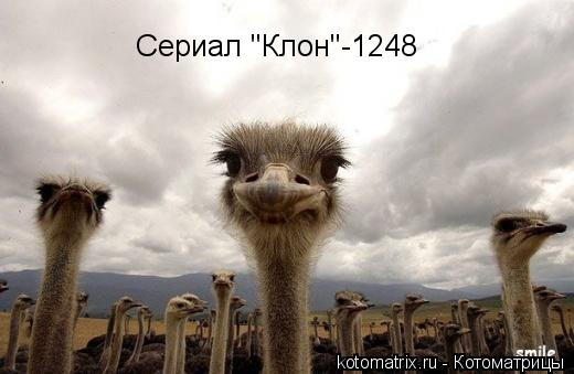 "Котоматрица: Сериал ""Клон""-1248"