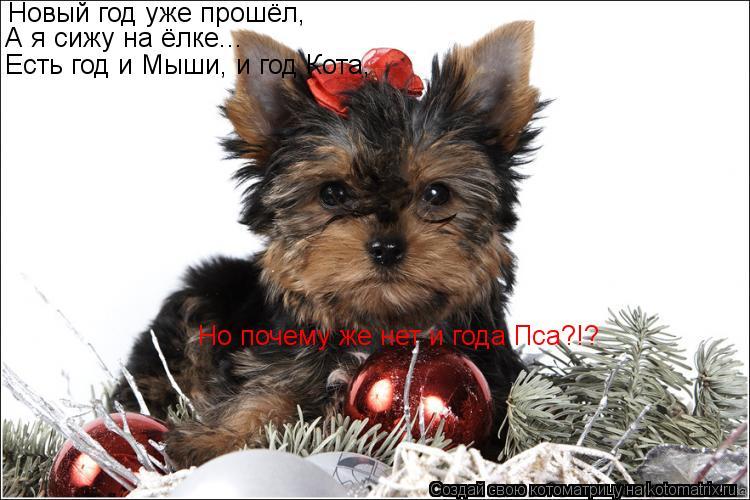 Котоматрица: Новый год уже прошёл, А я сижу на ёлке... Есть год и Мыши, и год Кота, Но почему же нет и года Пса?!?