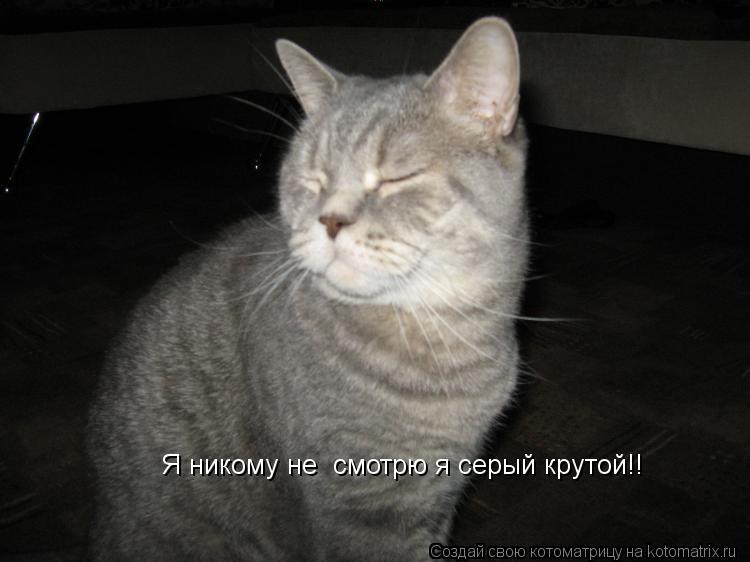 Котоматрица: Я никому не  смотрю я серый крутой!!