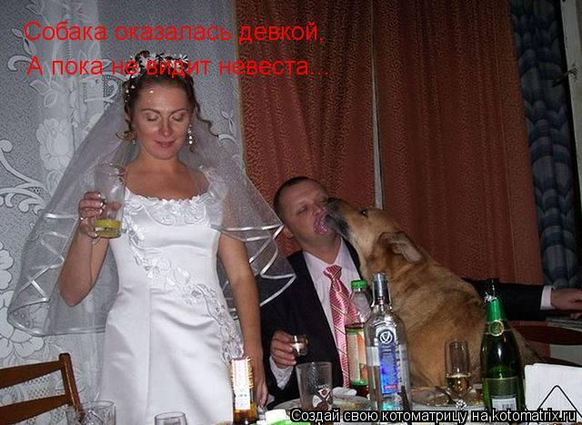 Котоматрица: Собака оказалась девкой, А пока не видит невеста...