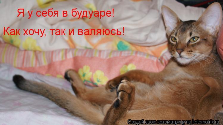 Котоматрица: Я у себя в будуаре!  Как хочу, так и валяюсь!