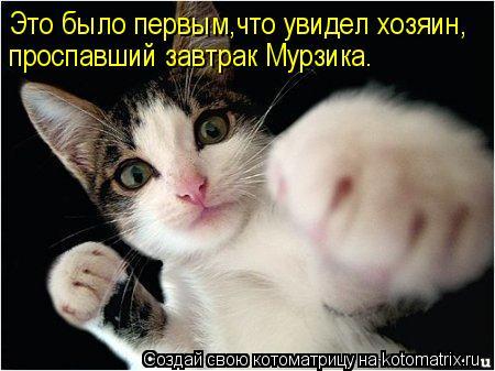 Котоматрица - Это было первым,что увидел хозяин, проспавший завтрак Мурзика.