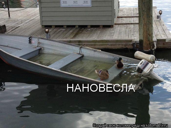 Котоматрица: НАНОВЕСЛА