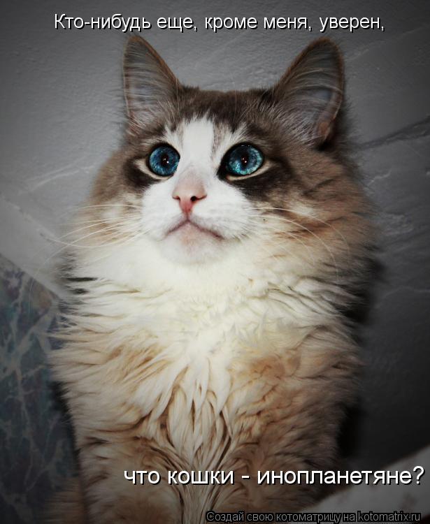 Котоматрица: Кто-нибудь еще, кроме меня, уверен, что кошки - инопланетяне?