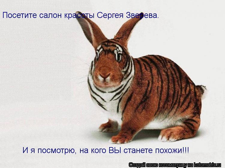 Котоматрица: Посетите салон красоты Сергея Зверева. И я посмотрю, на кого ВЫ станете похожи!!!