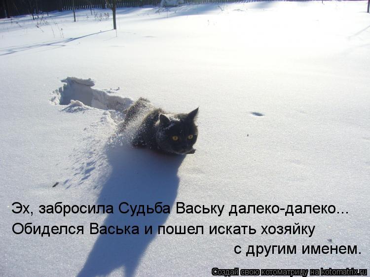 Котоматрица: Эх, забросила Судьба Ваську далеко-далеко... Обиделся Васька и пошел искать хозяйку с другим именем.