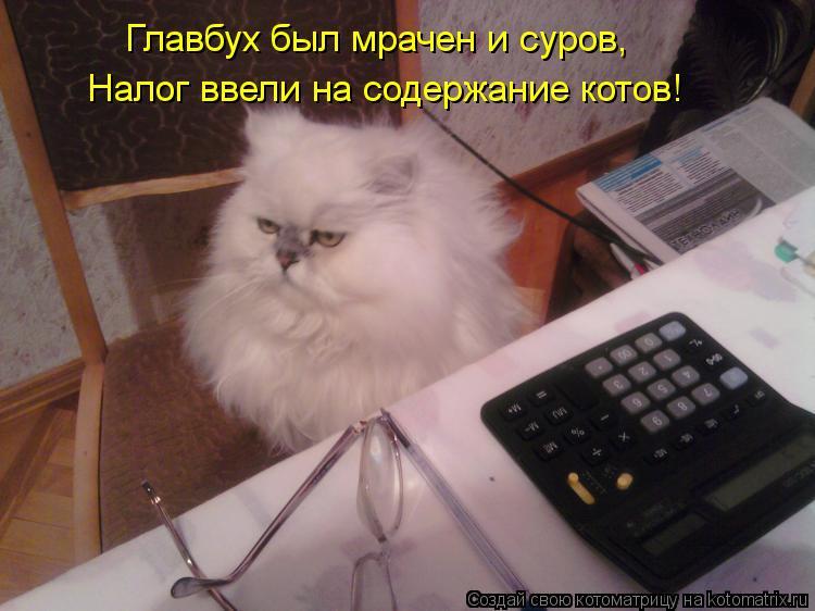 Котоматрица: Главбух был мрачен и суров, Налог ввели на содержание котов!