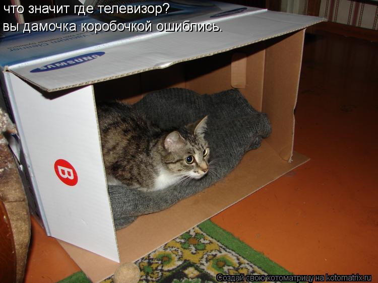 Котоматрица: что значит где телевизор? вы дамочка коробочкой ошиблись. что значит где телевизор?