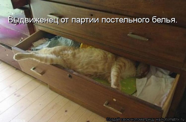 Котоматрица - Выдвиженец от партии постельного белья.