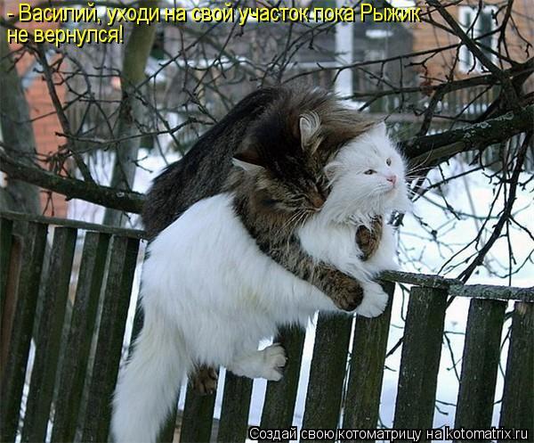 Котоматрица: - Василий, уходи на свой участок пока Рыжик  не вернулся!