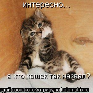 Котоматрица: интересно... а кто кошек так назвал?
