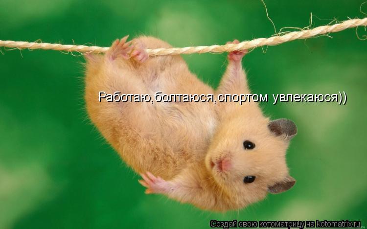 Котоматрица: Работаю,болтаюся,спортом увлекаюся))