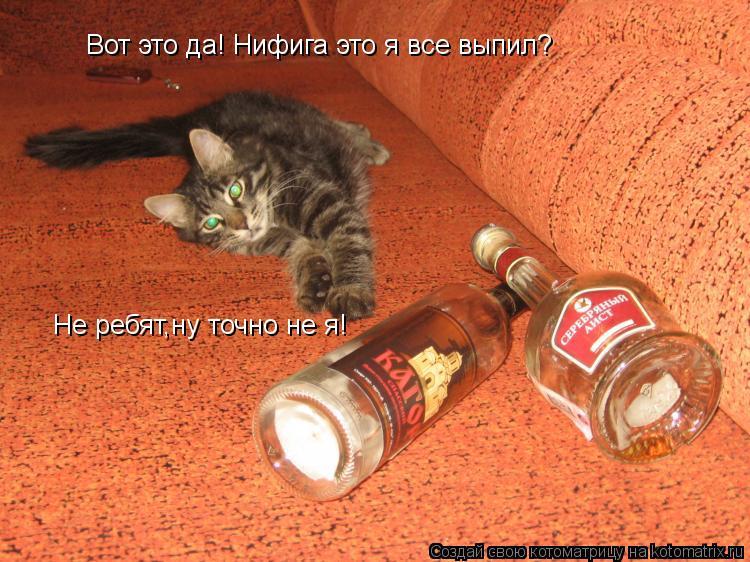 Котоматрица: Вот это да! Нифига это я все выпил? Не ребят,ну точно не я!