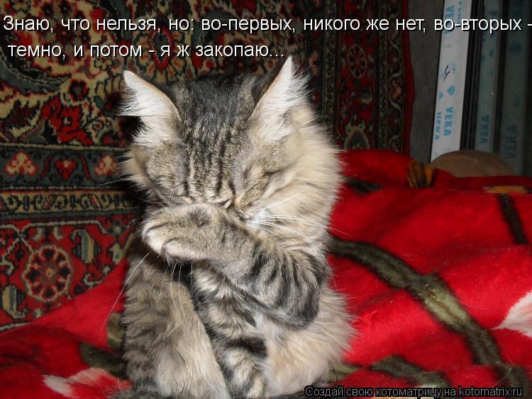 Котоматрица: Знаю, что нельзя, но: во-первых, никого же нет, во-вторых - темно, и потом - я ж закопаю...  темно, и потом - я ж закопаю...