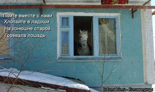Котоматрица: Пойте вместе с нами Хлопайте в ладоши На конюшне старой Горевала лошадь
