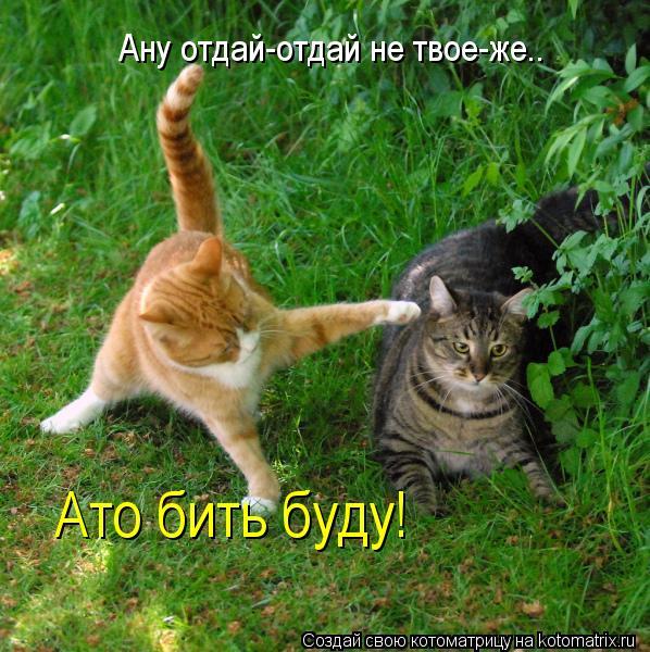 Котоматрица: Ану отдай-отдай не твое-же.. Ато бить буду!