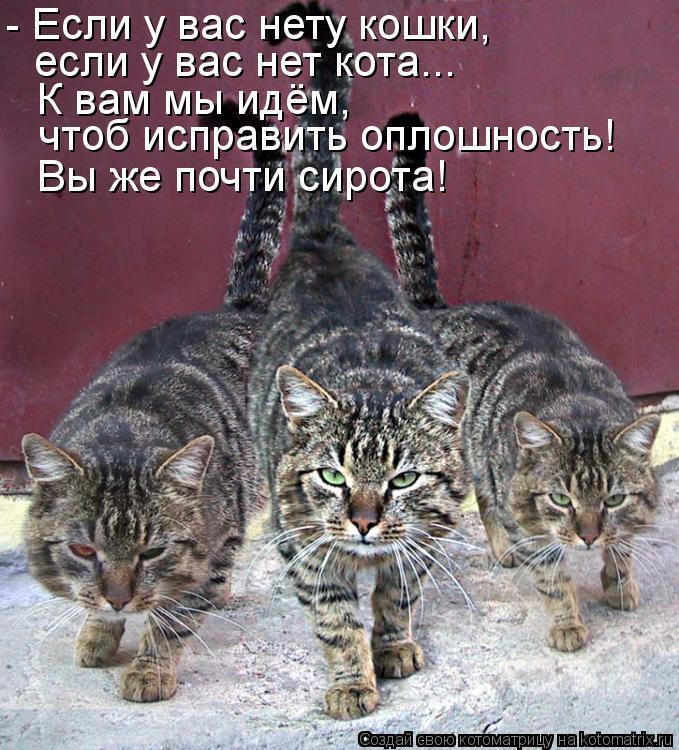 Котоматрица - - Если у вас нету кошки, если у вас нет кота... К вам мы идём,  чтоб и