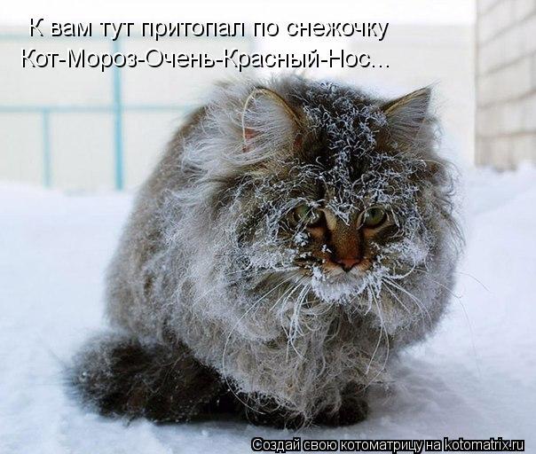 Котоматрица: К вам тут притопал по снежочку Кот-Мороз-Очень-Красный-Нос...