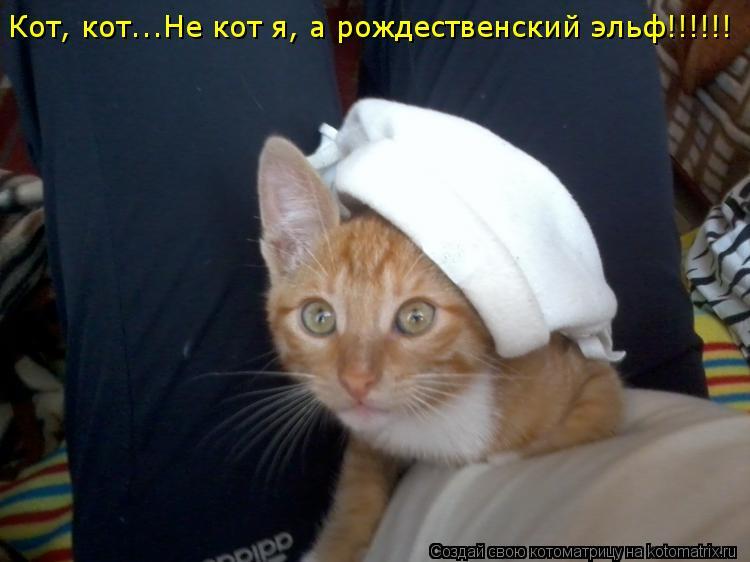 Котоматрица: Кот, кот...Не кот я, а рождественский эльф!!!!!! Кот, кот...Не кот я, а рождественский эльф!!!!!!