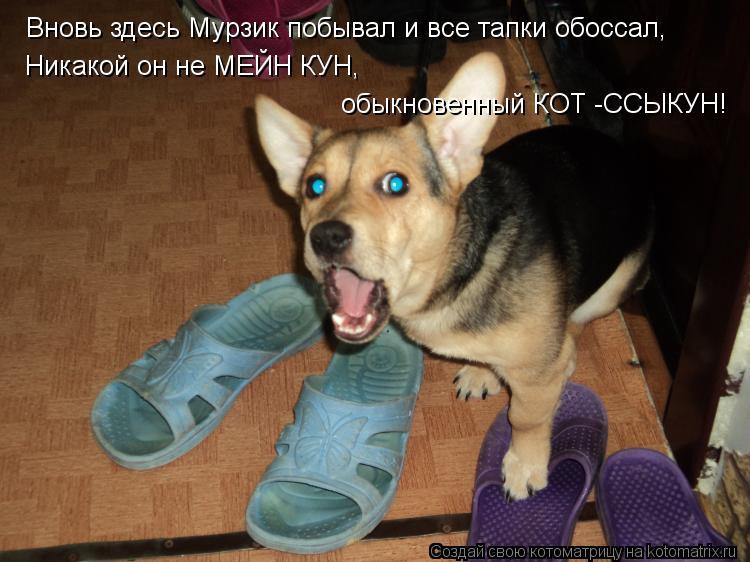 Котоматрица: Вновь здесь Мурзик побывал и все тапки обоссал, Никакой он не МЕЙН КУН,  обыкновенный КОТ -ССЫКУН!