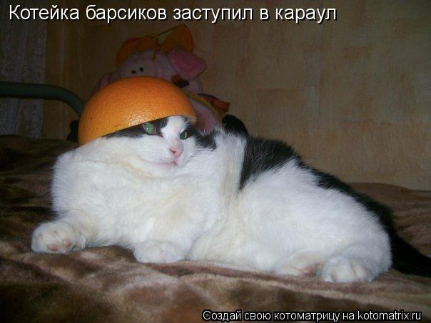 Котоматрица: Котейка барсиков заступил в караул