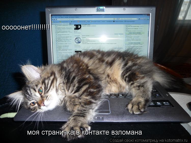 Котоматрица: ооооонет!!!!!!!!! моя страничка в контакте взломана