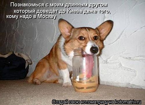 Котоматрица: Познакомься с моим длинным другом который доведет до Киева даже того, кому надо в Москву