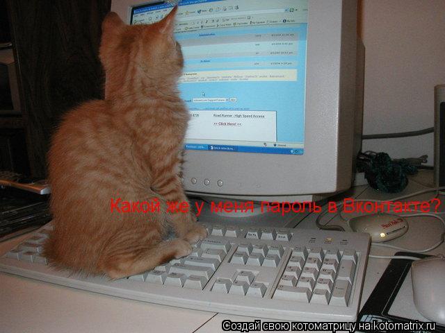 Котоматрица: Какой же у меня пароль в Вконтакте?