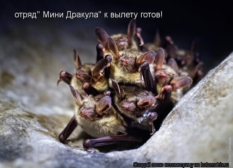 """Котоматрица: отряд"""" Мини Дракула"""" к вылету готов!"""