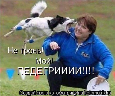 Котоматрица: Не тронь! Мой! ПЕДЕГРИИИИ!!!!