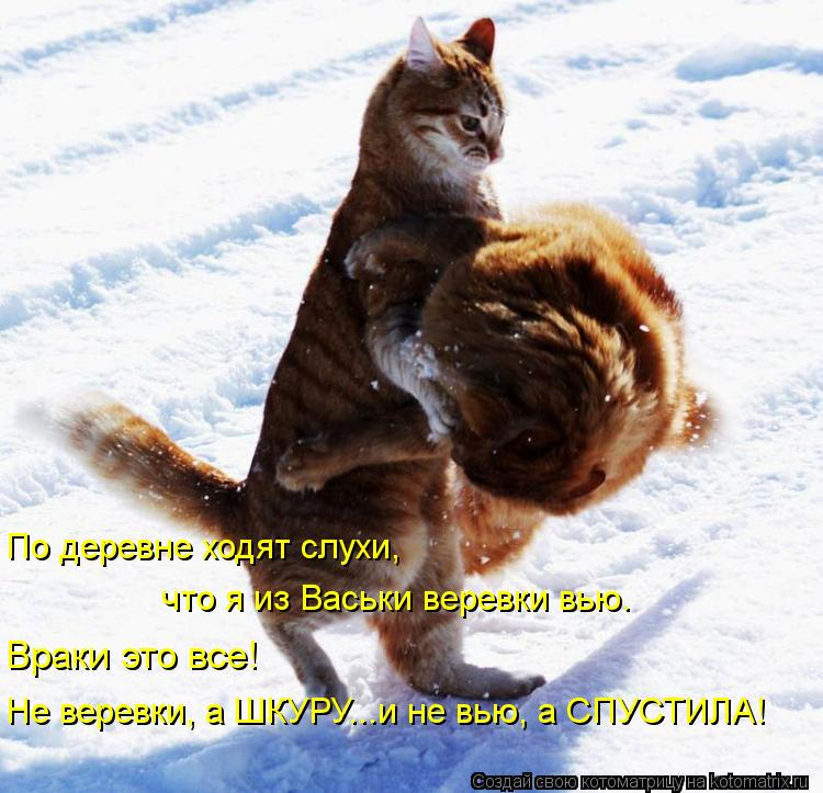 Котоматрица: По деревне ходят слухи,  что я из Васьки веревки вью. Враки это все! Не веревки, а ШКУРУ...и не вью, а СПУСТИЛА!
