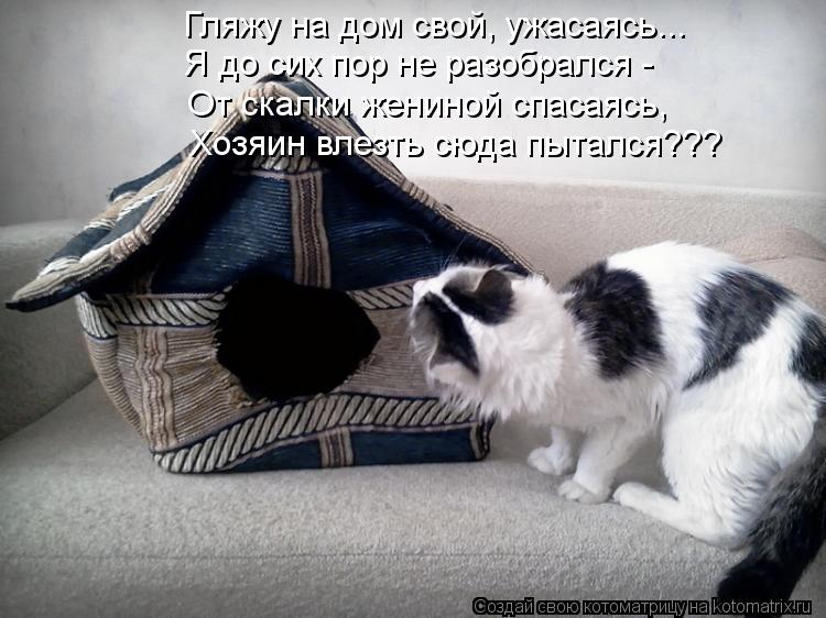Котоматрица: Гляжу на дом свой, ужасаясь... Я до сих пор не разобрался - От скалки жениной спасаясь, Хозяин влезть сюда пытался???