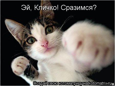 Котоматрица: Эй, Кличко! Сразимся?