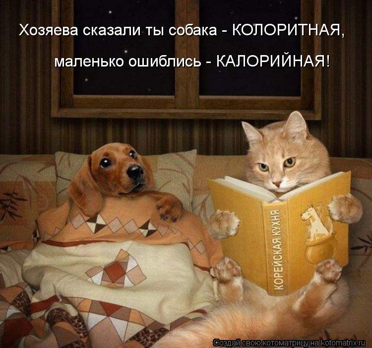 Котоматрица: Хозяева сказали ты собака - КОЛОРИТНАЯ, маленько ошиблись - КАЛОРИЙНАЯ!