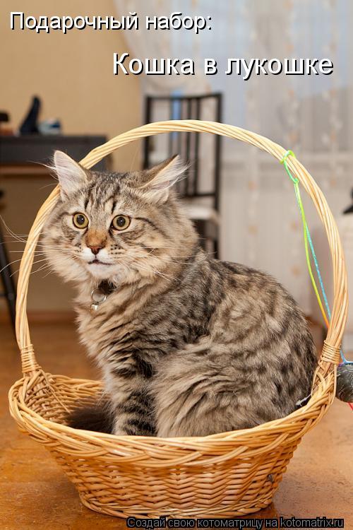Котоматрица: Подарочный набор: Кошка в лукошке