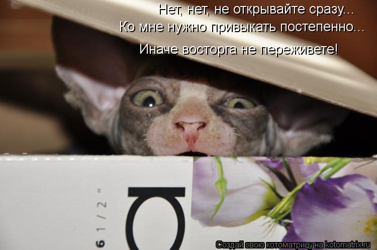 Котоматрица - Нет, нет, не открывайте сразу... Ко мне нужно привыкать постепенно...