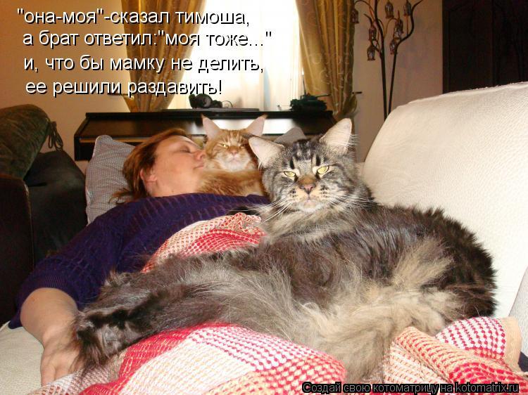 Недвижимость кошка она хочет спать слова ввода прикорма