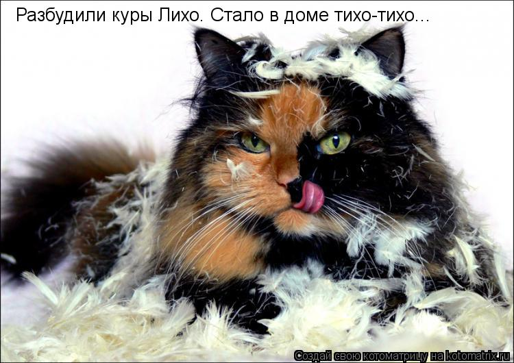 Котоматрица: Разбудили куры Лихо. Стало в доме тихо-тихо...