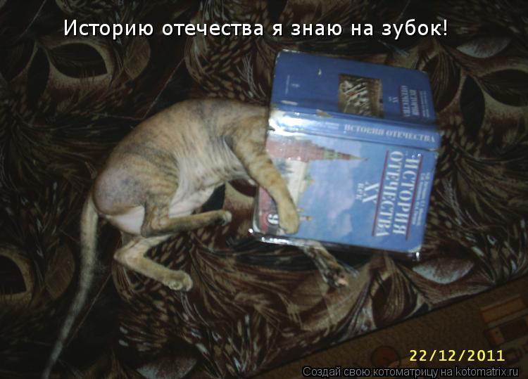 Котоматрица: Историю отечества я знаю на зубок!