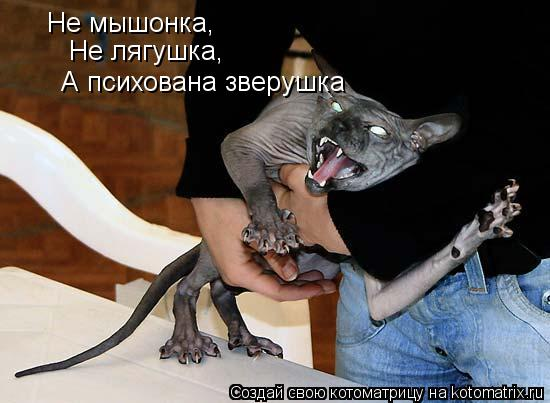 Котоматрица: Не мышонка, Не лягушка, А психована зверушка