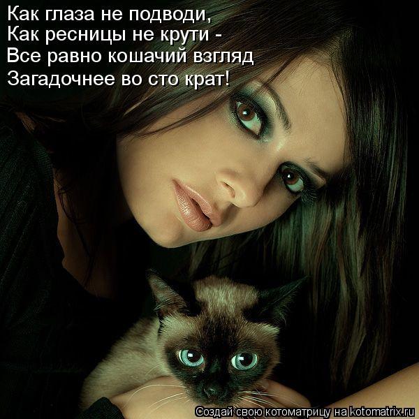 Котоматрица - Как глаза не подводи, Как ресницы не крути - Все равно кошачий взгляд