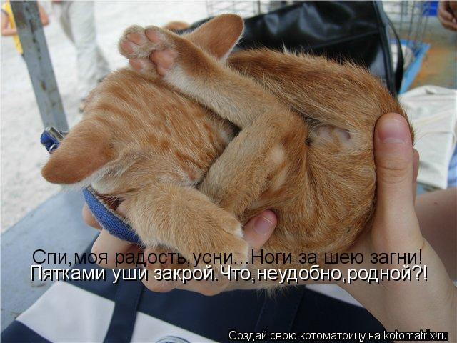 Котоматрица: Спи,моя радость,усни...Ноги за шею загни! Пятками уши закрой.Что,неудобно,родной?!
