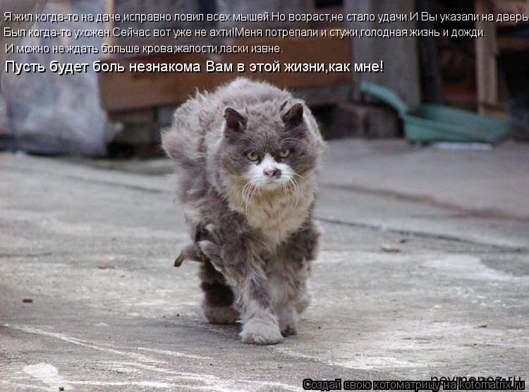 Котоматрица: Я жил когда-то на даче,исправно ловил всех мышей.Но возраст,не стало удачи.И Вы указали на дверь! Был когда-то ухожен.Сейчас вот уже не ахти!М