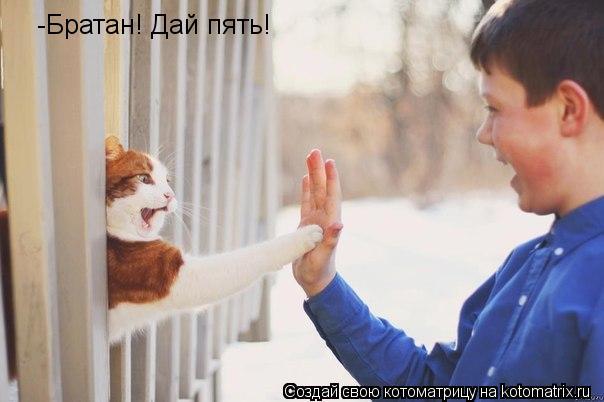 Котоматрица: -Братан! Дай пять!