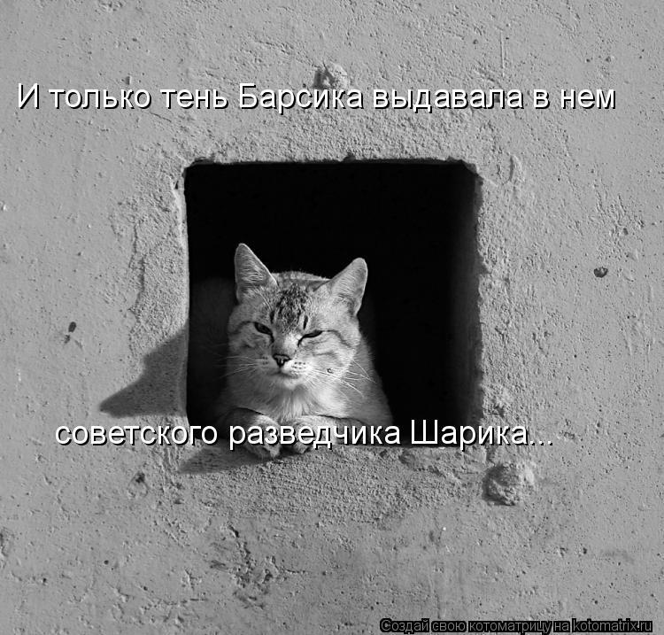 Котоматрица: И только тень Барсика выдавала в нем  советского разведчика Шарика...