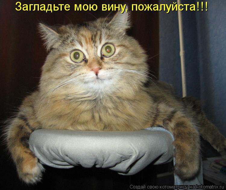 Котоматрица - Загладьте мою вину, пожалуйста!!!